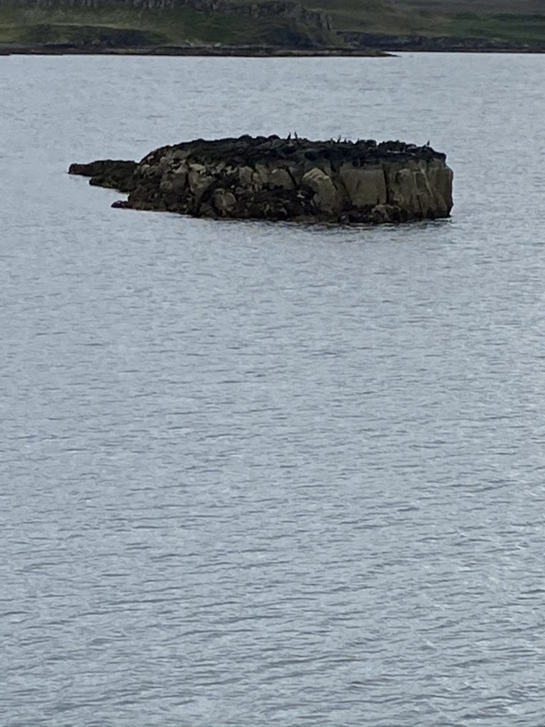 Shag sat on a rock in the loch